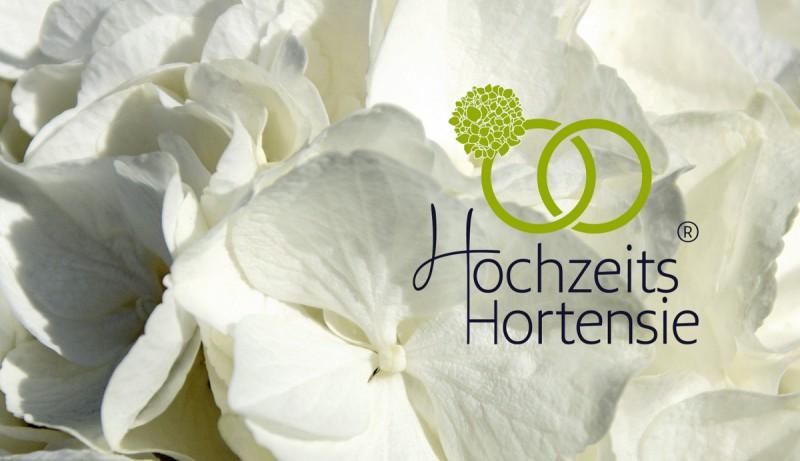 hochzeits hortensie die perfekte tischdeko hortensientr ume. Black Bedroom Furniture Sets. Home Design Ideas