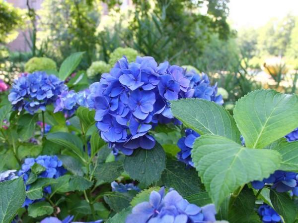 macr-Baby-Blue1-min